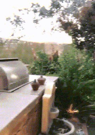 Sexy Barbecue